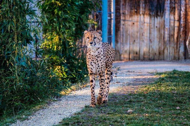 Tonis Zoo-0260.jpg