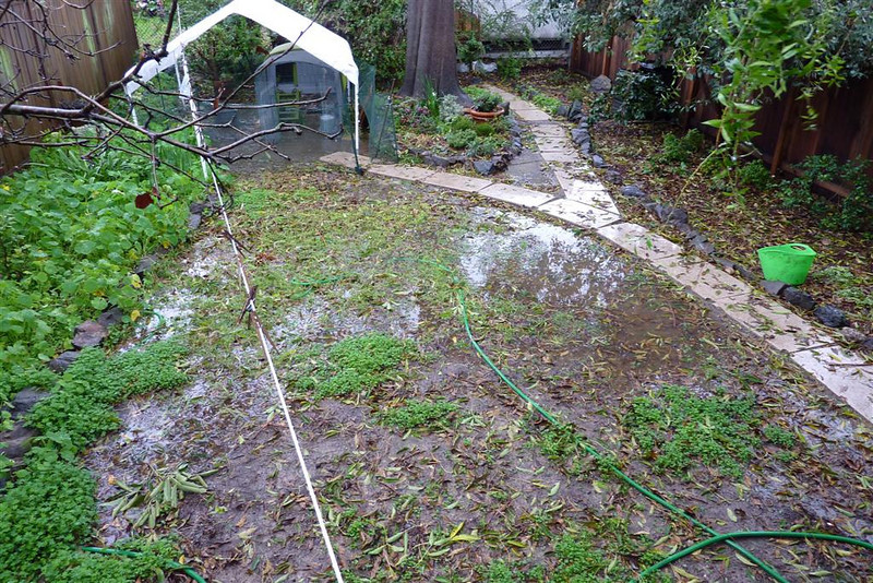 The backyard flooded badly in the storms in mid-January 2010. The whole chicken pen sat in a puddle.