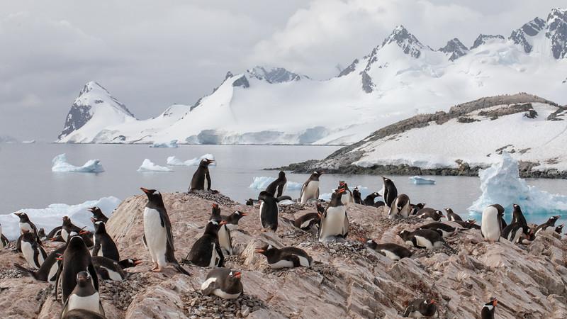 2019_01_Antarktis_03260.jpg