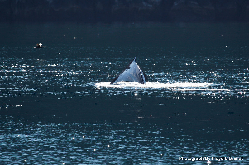 Alaska Kenai Fjords0041.JPG