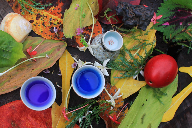 Blue tea - butterfly pea, in sake cups