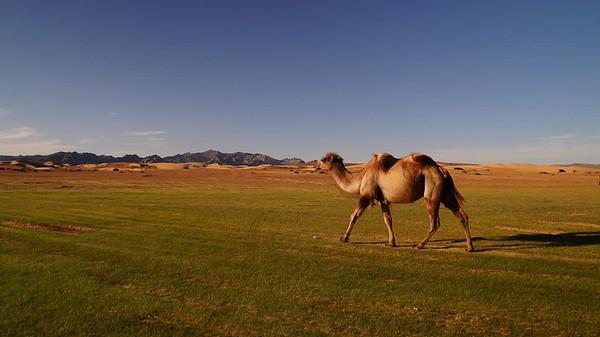 2 часть. Монголия летом 2017