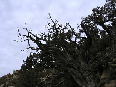 Pictograph Canyon (3.28.06)