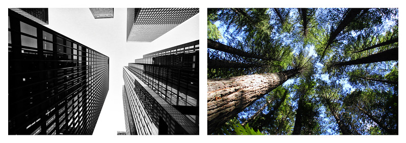 Tree Buildings L copy.jpg