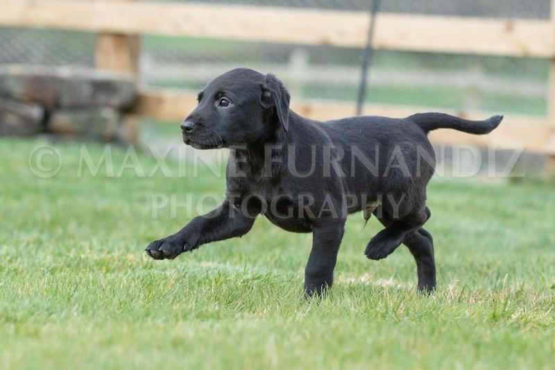Weika Puppies 24 March 2019-6510.jpg