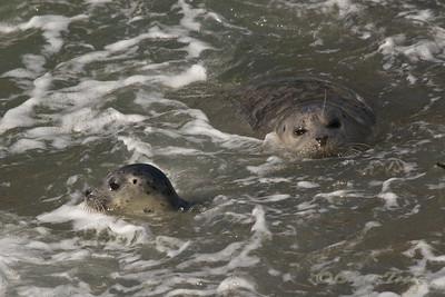 Seals 2012