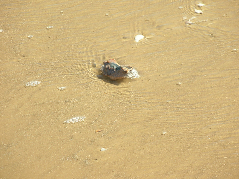 rock shell with water running past