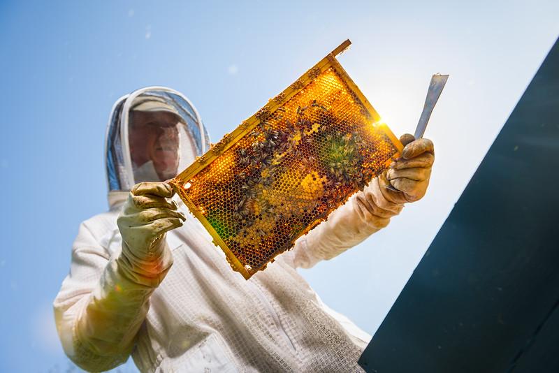 Woodstock Beekeeper