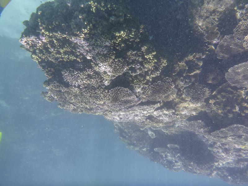 09. Lady Elliott Island-0049.jpg