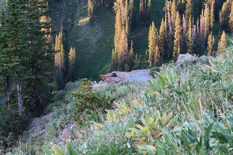 Good Morning, Marmot!      (brown blob = marmot)