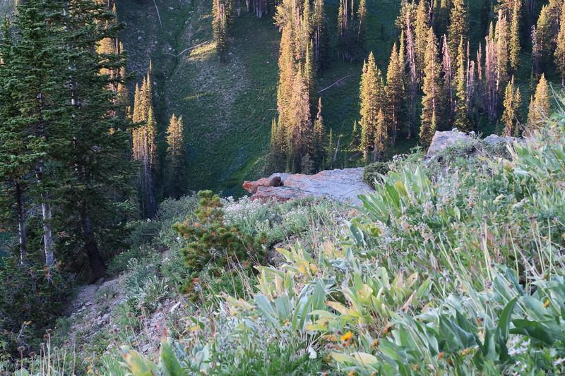 Good Morning, Marmot!      (brown blob = marmot)
