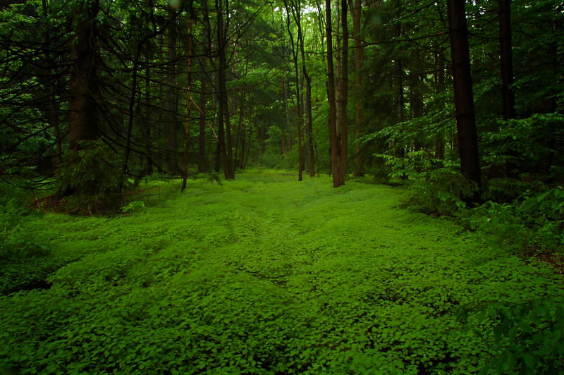 Inv #46 Forest path.JPG