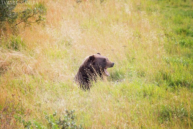 Bear-11.jpg