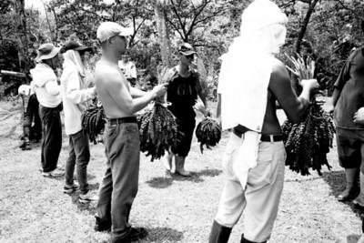 不老部落小米採收 BW