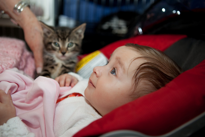 Some woman tried to take photos of her baby with a kitten. I can't remember why I let her.