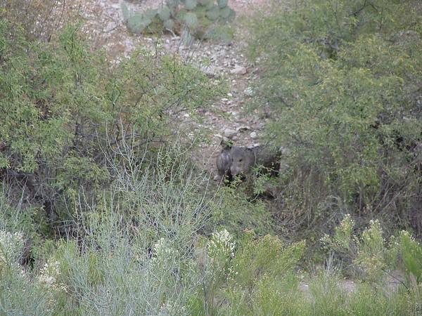 2004 Wildlife