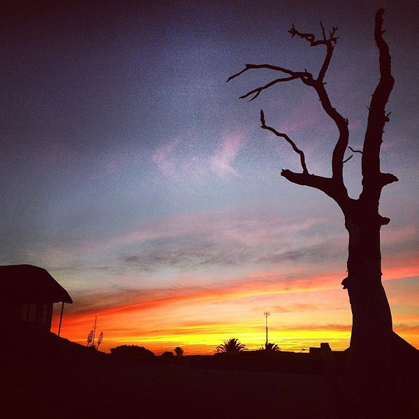 South Africa Sunset -- or a loner on the veldt.