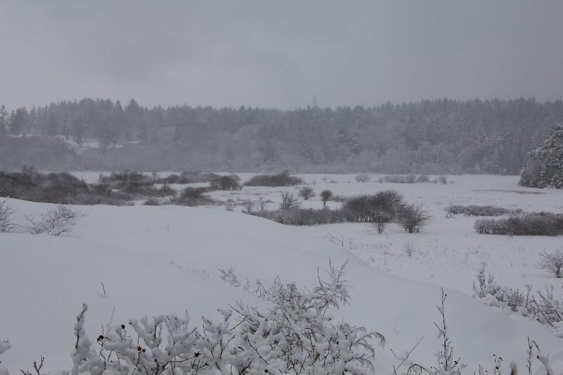 Snow On Island View Salt Marsh