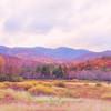 Autumn Rhythm © Amy Gallatin, all rights reserved.