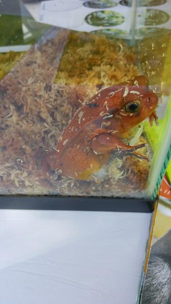 2016 Frog-uary