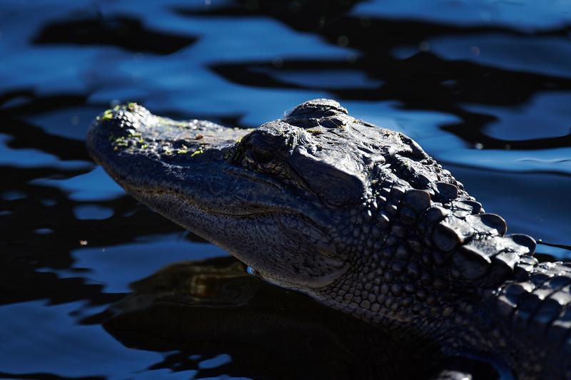 20181103 - Brazoria Wildlife Refuge-85B_4074.jpg