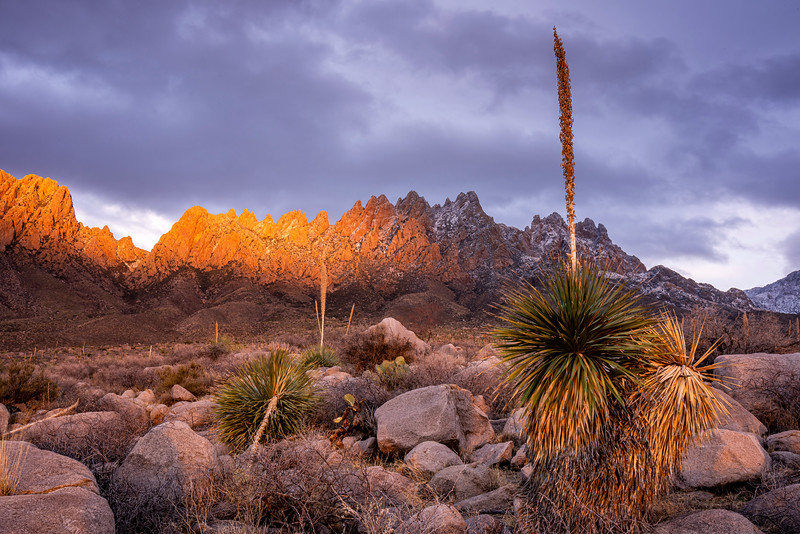 Organ Mountains #2