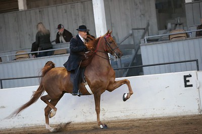 16. Five Gaited - Novice