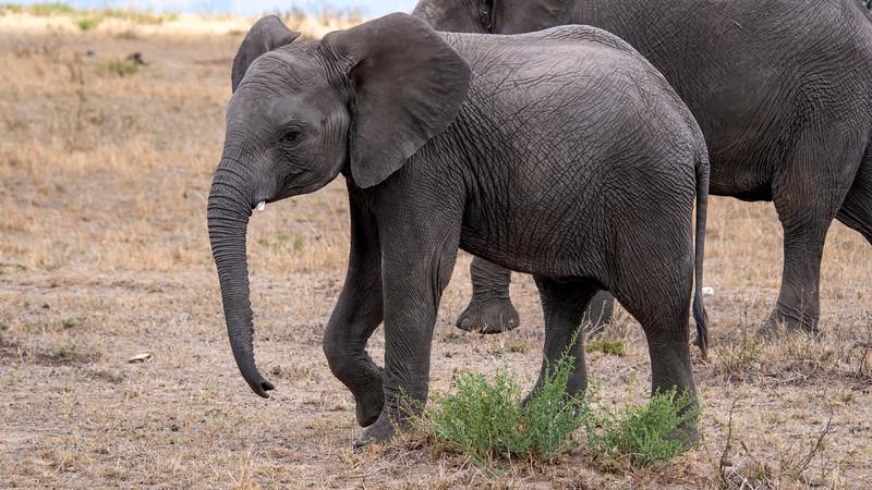 Tanzania-Serengeti-National-Park-Safari-Elephant-02.jpg