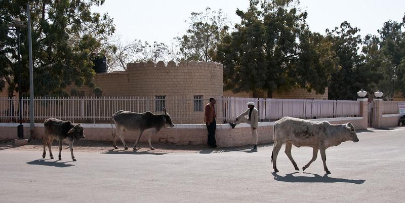 POW Day 5-_DSC3474- Jaisalmer.jpg