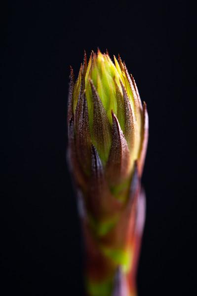 flower 030620 -1831.jpg