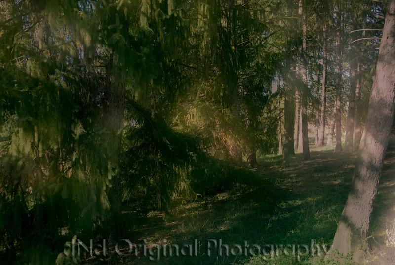 003 Craig White Senior Portraits (scope it out) dreamsuite dreamy.jpg