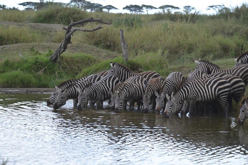 East Africa Safari 271.jpg