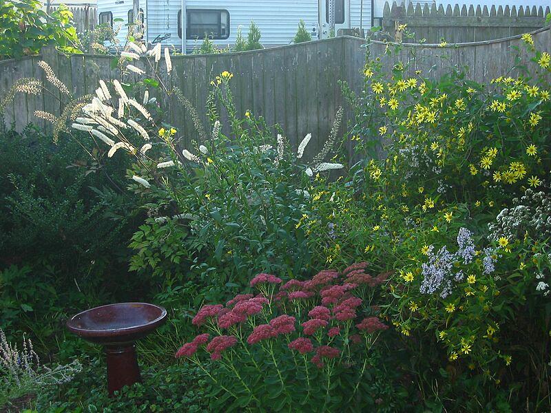 garden-2006-09-0538_std.jpg