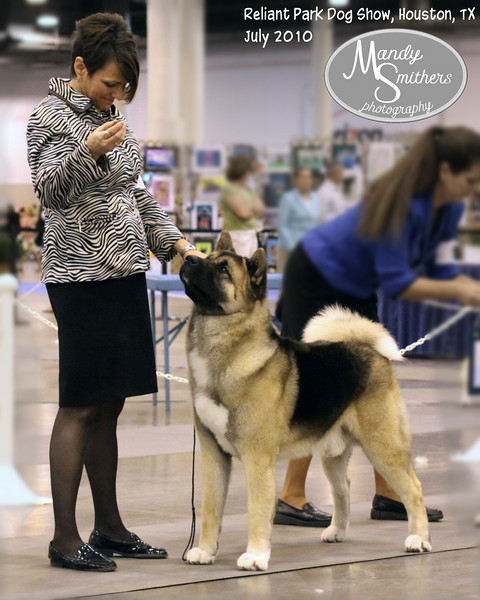 2010 Houston Dog Show