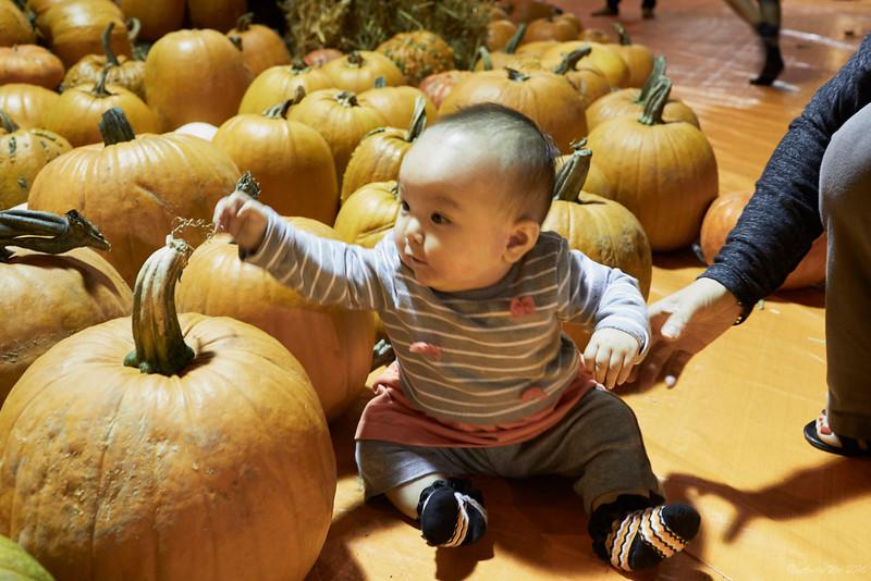 pumpkin__15.jpg