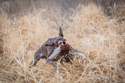 MN State Pheasant 1-2019