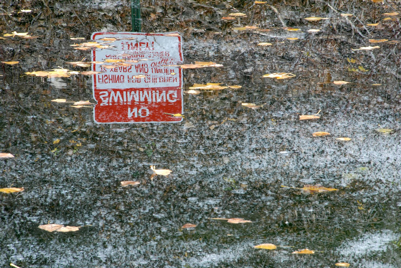 11/9/07 – I went looking for a photo but found the unexpected. Fall has been very warm but this small pond is in the shade 24 hours a day. It is actually frozen. The No Swimming sign is reflecting off the glass-like ice. The white looking stuff is small bubbles trapped in the ice.
