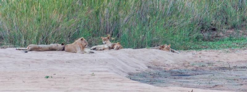 safari 2 (7 of 23).jpg