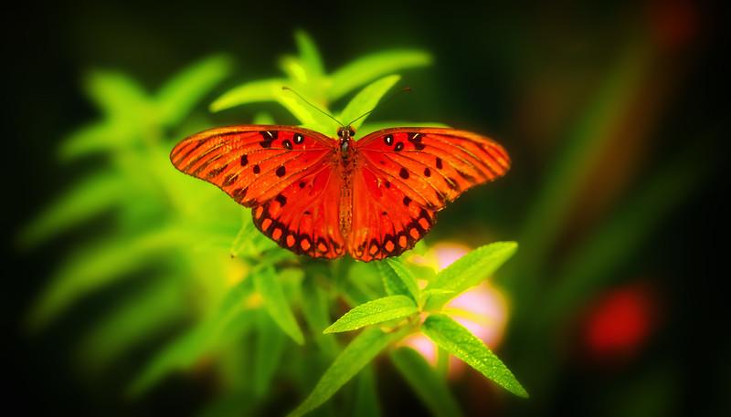 Butterfly-104.jpg