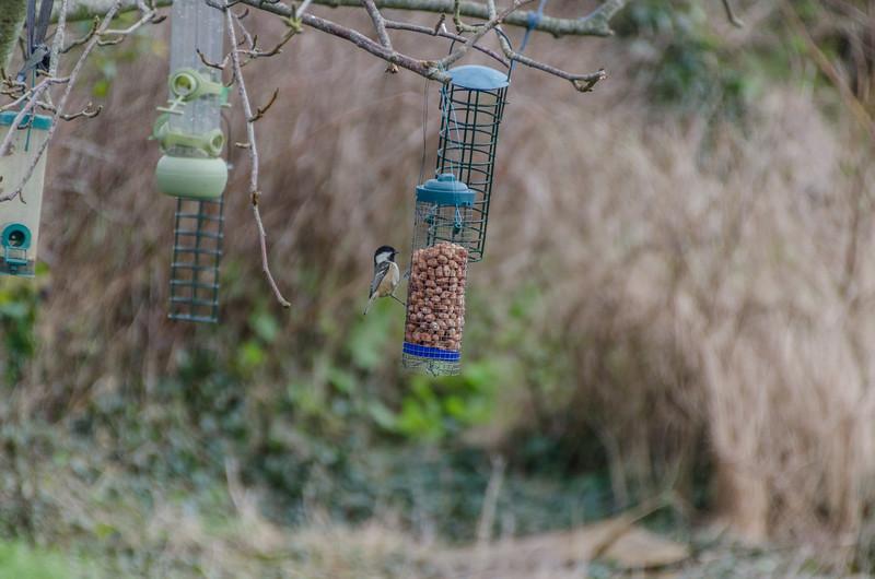 Birds 270118-1.jpg