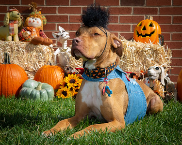 Chik Fil A Yappy Hour Oct 2019