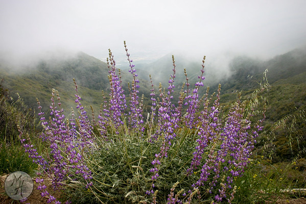Saddleback Mountain Top Adventure