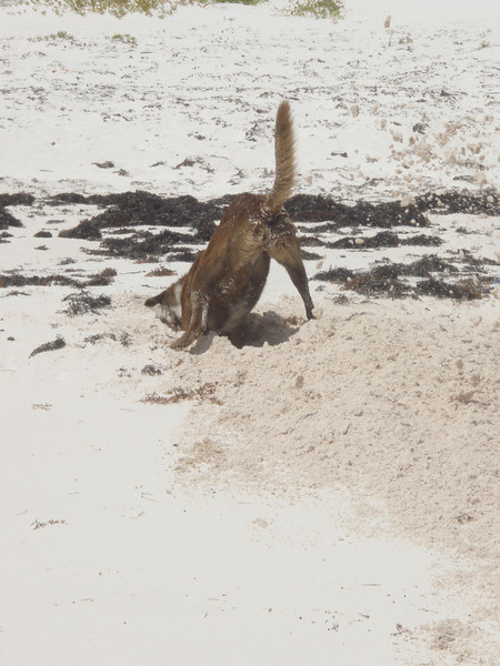 beach hunting