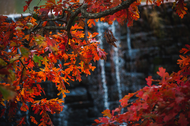 FallFoliage-5.jpg