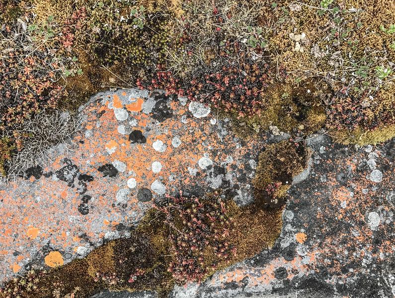 Lichens on rock Hudson Bay Churchill Manitoba Canada IMG_7872.jpg