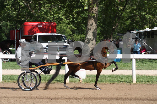 Ivanhoe Horse Show 2010-Roadster Ponies