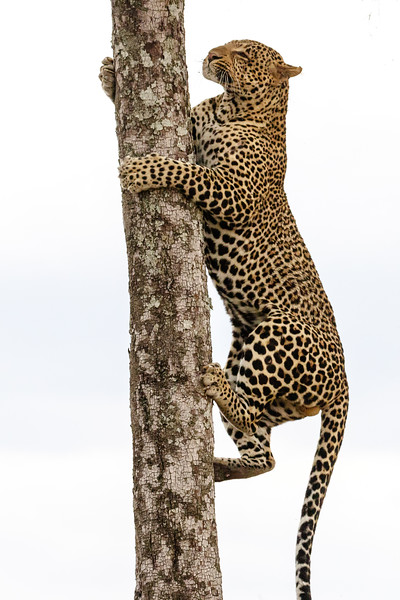 Kenya 2015-08572.jpg