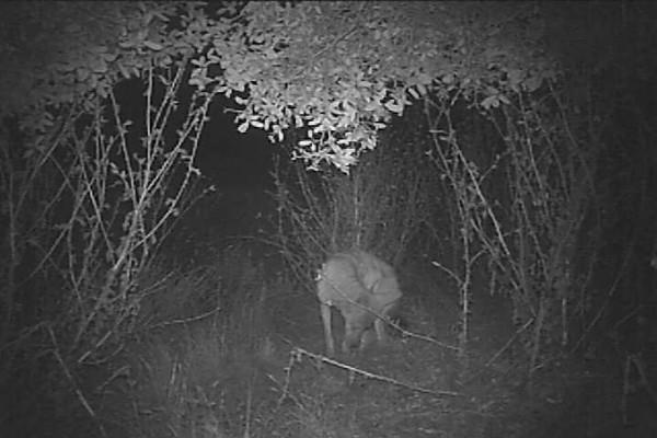 Coyote7.AVI