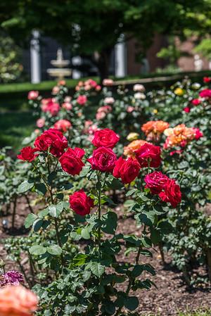 Rose Garden 2016