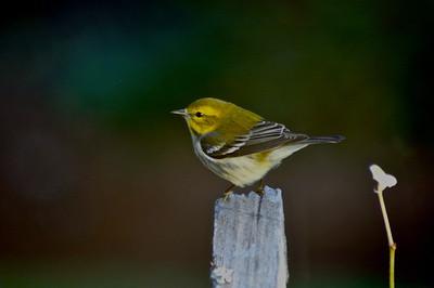 Viewing Backyard Birds